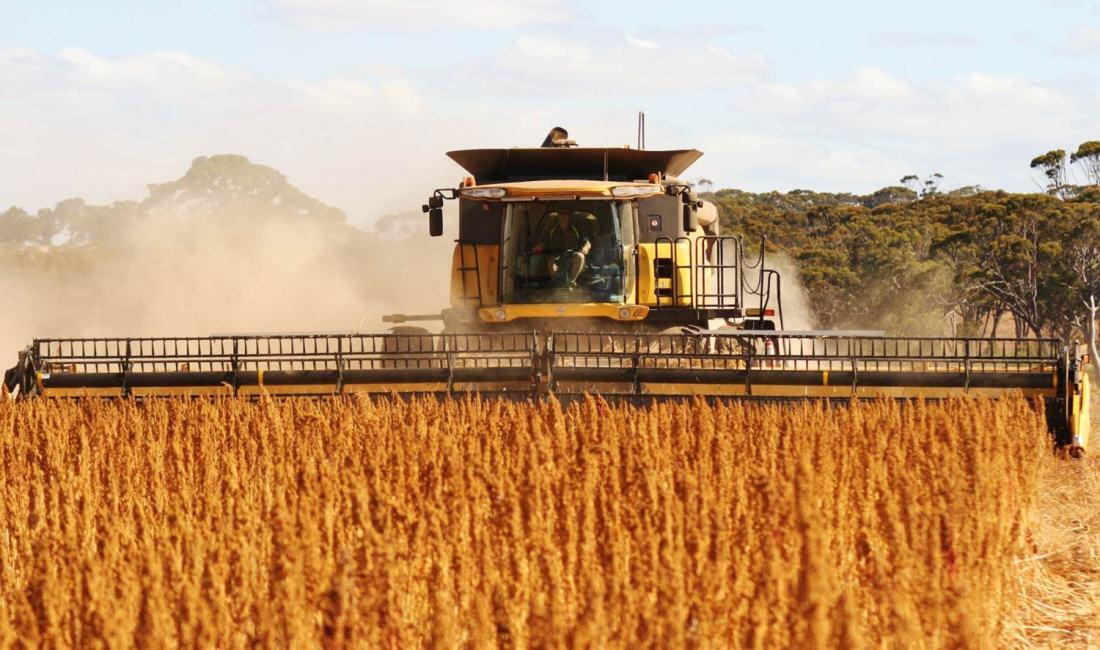 Quinoa-harvest-2